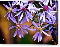 Purple Flowers Acrylic Print by Andre Faubert