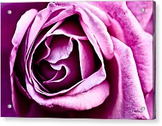 Purple Folds Acrylic Print by Christopher Holmes
