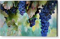 Purple Grapes Acrylic Print by Susan Holsan