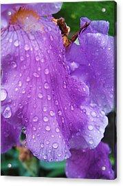 Purple Rain Acrylic Print by Todd Sherlock