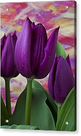 Purple Tulips Acrylic Print by Garry Gay