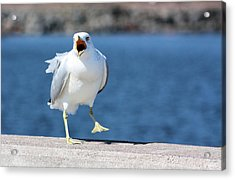 Putting His Foot Down Acrylic Print by Kristin Elmquist