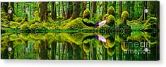 Queen Charlotte Island Swamp Acrylic Print by David Nunuk