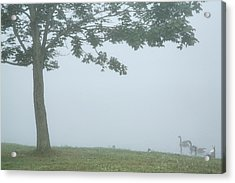 Quiet Fog Rolling In Acrylic Print by Karol Livote