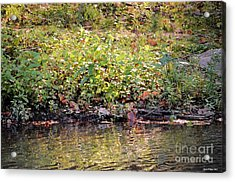 Quiet Moment Acrylic Print by Maria Urso