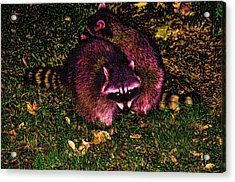 Racoons In Stanley Park Acrylic Print by Lawrence Christopher