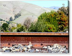Railroad Track In Fremont California Near Historic Niles District In California . 7d12676 Acrylic Print by Wingsdomain Art and Photography