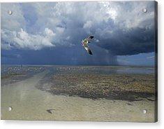 Rain Falls From A Huge Cloud Acrylic Print by Raul Touzon