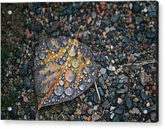 Raindrops Acrylic Print by Shirley Mailloux