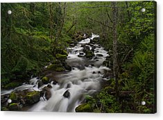 Rainier Forest Flow Acrylic Print by Mike Reid
