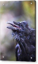 Raven Hyder, Alaska, Usa Acrylic Print by Richard Wear