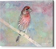 Ready To Sing My Song Acrylic Print by Betty LaRue