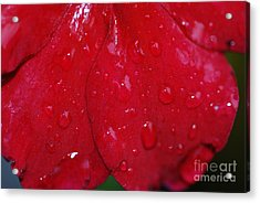 Red And Wet Acrylic Print by Paul Ward