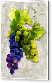 Red And White Grapes Acrylic Print by Elaine Plesser