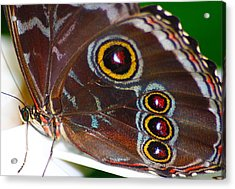 Red And Yellow Eyes Acrylic Print by Scott Hovind
