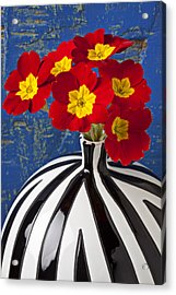 Red And Yellow Primrose Acrylic Print by Garry Gay