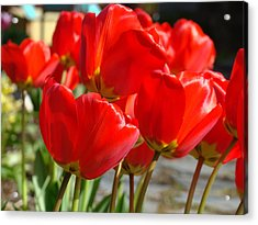 Red Art Spring Tulip Flowers Floral Acrylic Print by Baslee Troutman