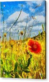 Red Flower In The Field Acrylic Print by Jeff Kolker