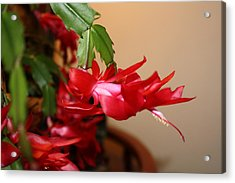 Red Flower Seduction Acrylic Print by James Collier