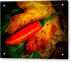 Red Hot Chili Pepper Acrylic Print by Chris Berry