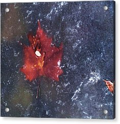 Red Leaf In Ice Acrylic Print by Todd Sherlock
