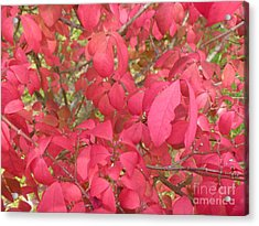 Red Leaves IIi Acrylic Print by Alys Caviness-Gober