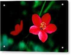 Red Petaled Dream Acrylic Print by Jennifer Bright