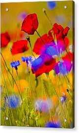 Red Poppies And Wildflowers In A Field, Soft Focus Acrylic Print by Bob Pool