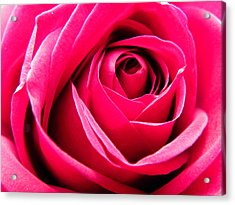 Red Rose Macro Acrylic Print by Sandi OReilly