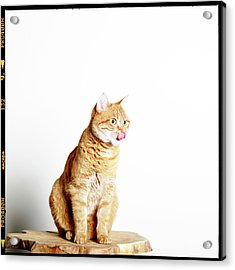 Red Tomcat Sitting On Wooden Table Acrylic Print by MarcelTB