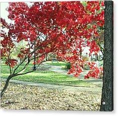 Red Tree Acrylic Print by Todd Sherlock