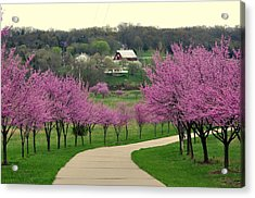 Redbud Acrylic Print by Marty Koch