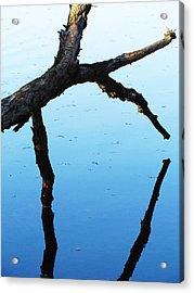 Reflections #1 Acrylic Print by Todd Sherlock