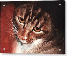 Reflective Kitty Acrylic Print by Tricia Griffith