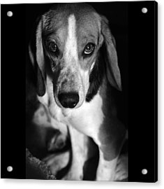 Rescued 6 Acrylic Print by Laura Melis