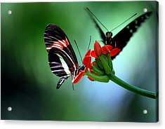 Reservations For Two Acrylic Print by Skip Willits