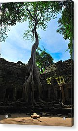 Resilience Acrylic Print by Krystoff Ackerman
