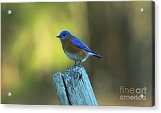 Resting In Color Acrylic Print by Greg Geraci