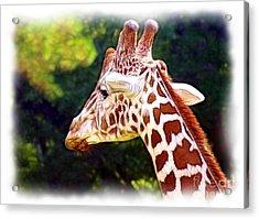 Reticulated Giraffe Acrylic Print by Judi Bagwell