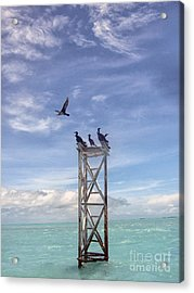 Revised Image Of Birds On Wooden Stand In The Ocean Off Key West Acrylic Print by Christopher Purcell