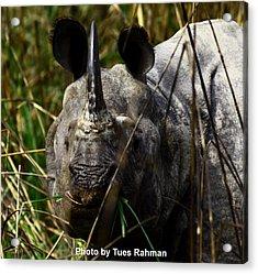 Rhino Acrylic Print by Tues Rahman