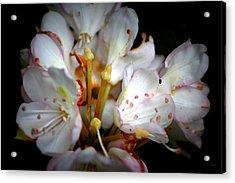 Rhododendron Explosion Acrylic Print by Deborah  Crew-Johnson