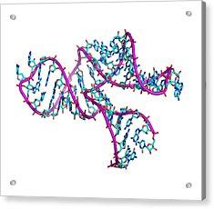 Ribozyme Molecule Acrylic Print by Laguna Design