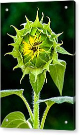 Rising Sun Acrylic Print by Christopher Holmes