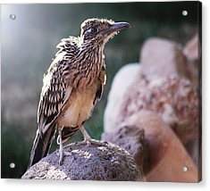 Road Runner Acrylic Print by Chelsey Beck