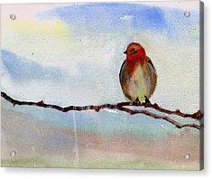 Robin 1 Acrylic Print by Anil Nene