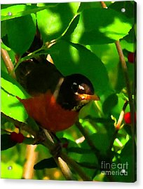 Robin Peeping Through Leaves Faux Oil Acrylic Print by Rrrose Pix