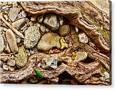 Rocks And Roots Acrylic Print by Christopher Holmes