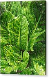 Romaine Unfurling Acrylic Print by Steve Asbell
