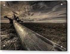 Roots Acrylic Print by James Ingham
